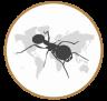 Ant's Kingdom | MeineAmeisenfarm.de
