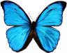 Big Bugs Butterflies